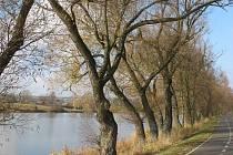 Sesazení korun u Pilské nádrže se bude týkat přibližně tří desítek vrb, které budou po zásahu vysoké šest až osm metrů, v některých případech i méně.