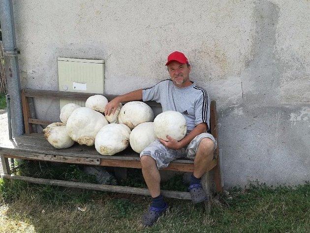 Houbař Pavel Rosecký z Velké Losenice přinesl i letos pořádný úlovek. Velké pýchavky na stejném místě nachází už několik let.