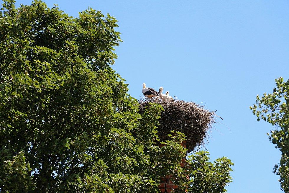 Čápi přinášejí na křídlech jaro.