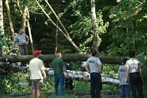 Desítky stromů strhla bouře například v okolí Vojnova Městce.