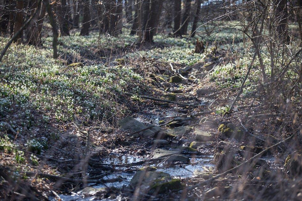 Bledule v údolí Chlébského potoka.