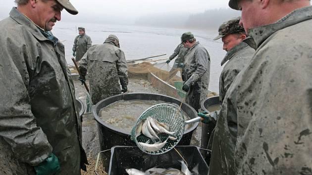 Rybáři v pondělí vylovili rybník Medlov na Žďársku. Jedna z největších a nejvýše položených vodních ploch v okrese jich zaměstnala zhruba na dvě desítky.