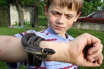 Mezi hady, které lze v přírodě žďárského okresu potkat, patří především zmije obecná a užovka obojková.  Oba plazi jsou vzácní a zákonem přísně chráněni.