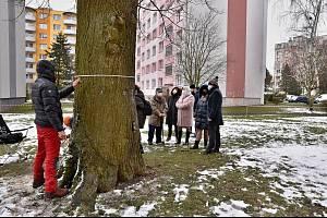 Sto let stará lípa na Libušíně má jít k zemi. Její zdravotní stav je podle dendrologů špatný.