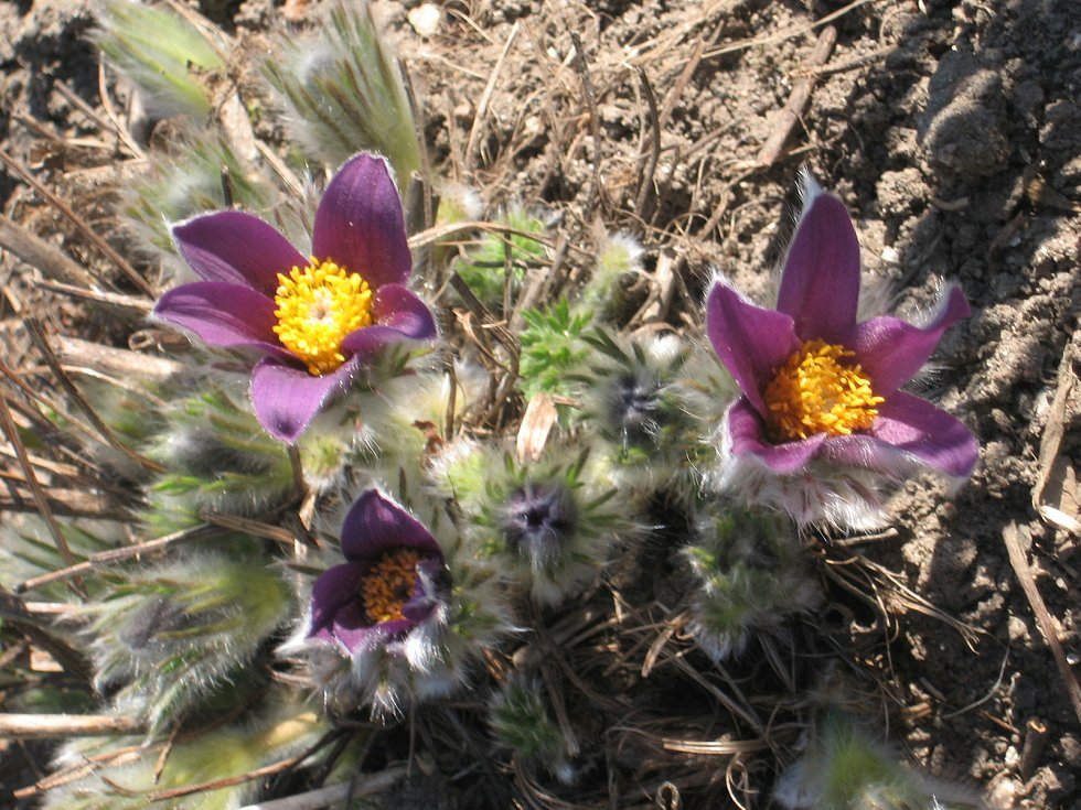 Rozkvetlé květiny na zahrádce. Jarní nálada voní na na každém kroku