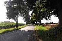 Jednou ze dvou nominovaných alejí ze Žďárska je i ta lemující silnici do vesnice Rozsochy. Zájemci ji mohou podpořit hlasováním  na stránkách ankety.