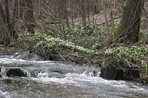 Květiny lemují břehy Chlébského potoka, turisté je obdivují ze stezky.