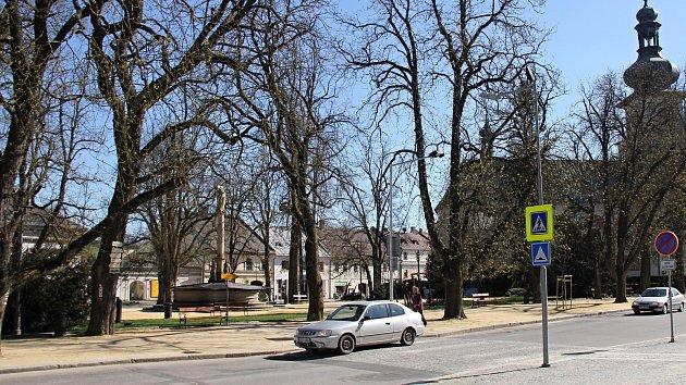 Kaštany na Vratislavově náměstí budou postupně nahrazeny novými.