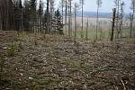 Okolí obce Rosička rok co rok navštěvují lidé s detektory kovu.