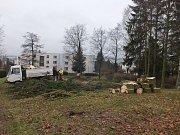 V rámci revitalizace bylo v lokalitě mezi ulicemi Polní a Lesní pokáceno jedenáct stromů. Na jaře bude místo nich vysazeno čtrnáct nových dřevin.