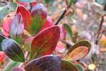 Pár střípků z kvetoucí končící letošní zahrady