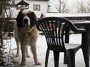 Doslova aprílové počasí, které nyní vládne na Žďársku, trápí nejen řidiče. Lidé vytáhli ze skříní opět teplé bundy a ke slovu se znovu dostaly zimní boty. Netradičně chladné počasí se dotýká i samotné přírody.