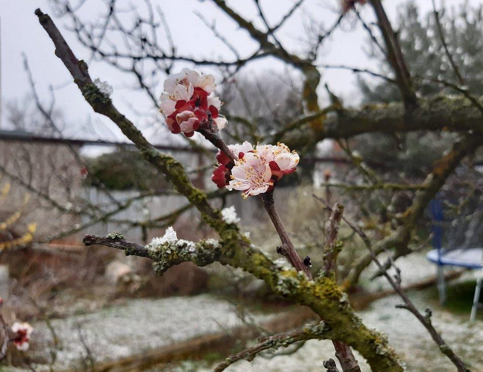 Na Vysočině letos mrzne i na jaře, ilustrační foto
