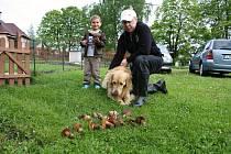 Pavel Hocke ve čtvrtek při venčení psa Bena našel sedm křemenáčů a deset hřibů kovářů.