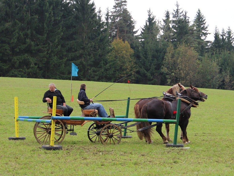 Couvání - pro koně náročná disciplína.