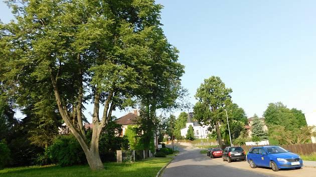 Ve Žďáře chtějí pokračovat s obnovou zeleně, na řadě jsou stromořadí