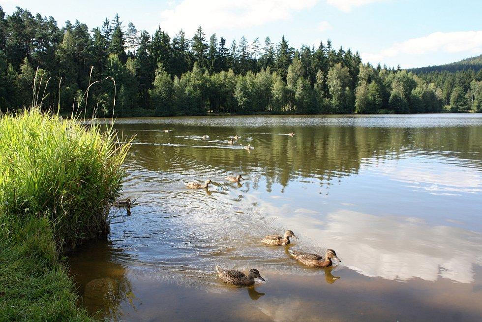 Kromě malebné přírody tato trasa nabídne i koupání vrybníku.