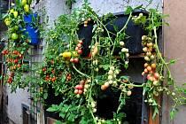 Rostliny vysadil zahradník do na zdi zavěšených samozavlažovacích truhlíků a do nádob, které fungují na stejném principu.