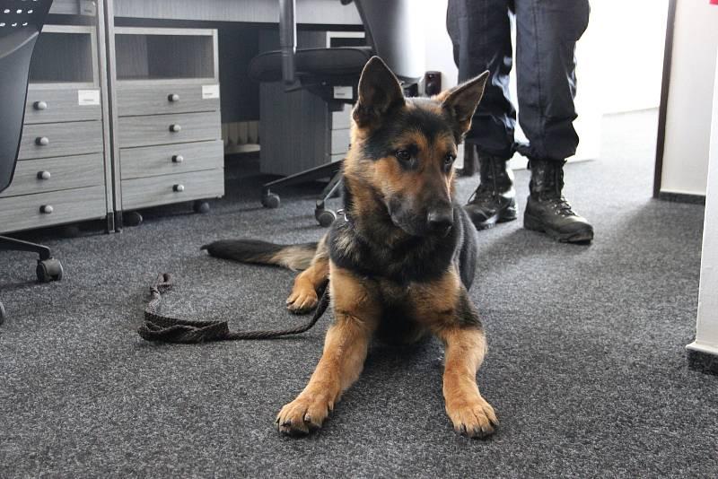 Nevyužívané prostory výpravní budovy žďárského vlakového nádraží patří nyní pětici policejních psovodů.