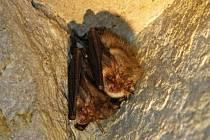 Spočítat netopýry v dole u Studnic je podle ochranářů mravenčí práce. Projít musí metr po metru.