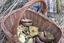 Chodíte rádi do lesa? Rostou ještě houby? Pochlubte se svými úlovky!