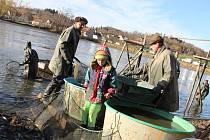 Z Panského rybníka v Heřmanově vytáhli rybáři tradiční kapry i trofejní sumce.