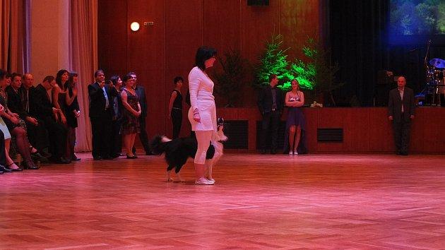 Společenský a myslivecký ples ve Žďáře
