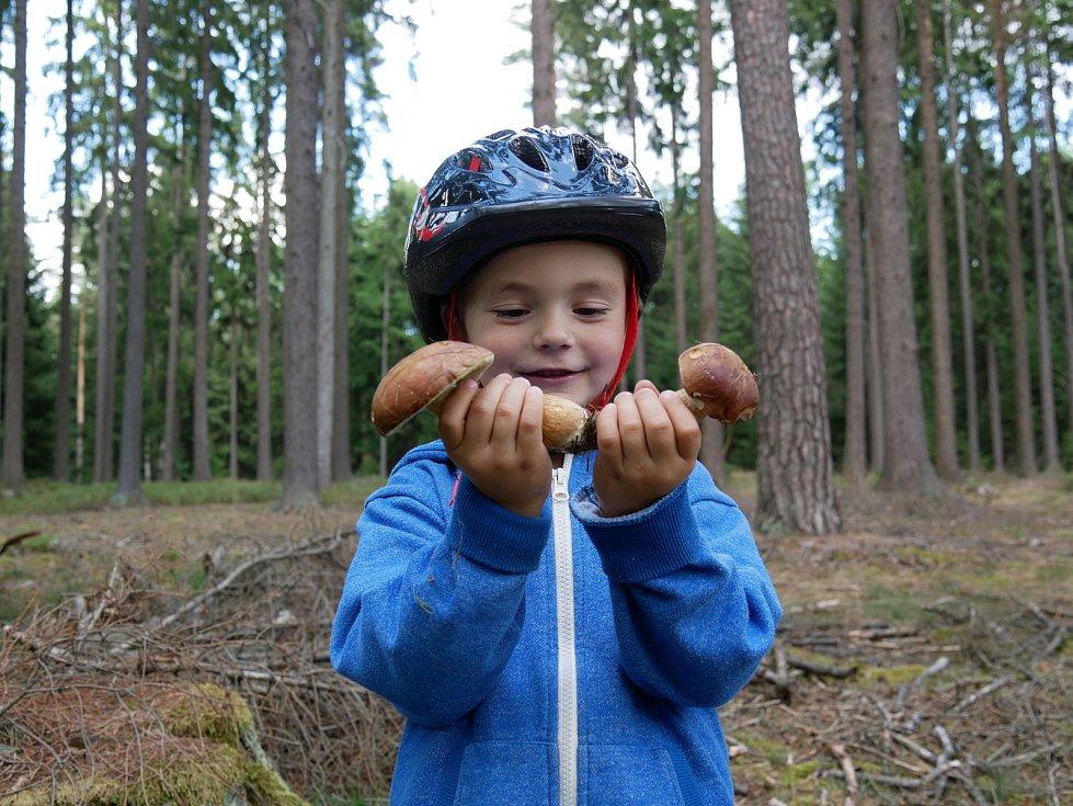 Houbaři si úlovky odnášejí hlavně z vlhčích lokalit - struh podél lesních cest, mokřin nebo z míst u rybníků a vodních toků.