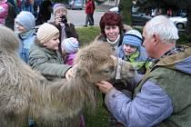Měřínské děti na Štědrý den putovaly za velbloudem