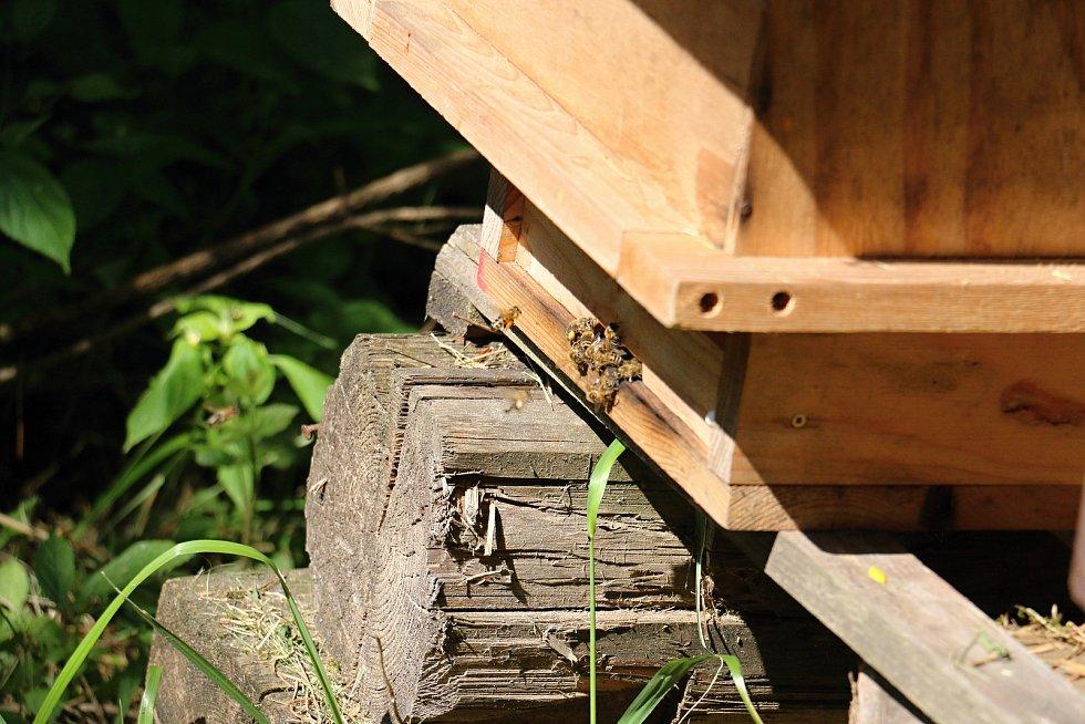 Novoměstští včelaři zvou rok co rok na exkurzi děti ze škol. Ukazují jim, jak se dělá med.