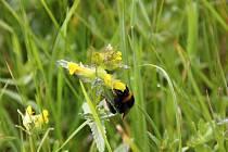 Podmáčené louky jsou domovem vzácných rostlinných druhů.