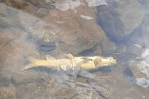 Mrtvé ryby. Ilustrační foto