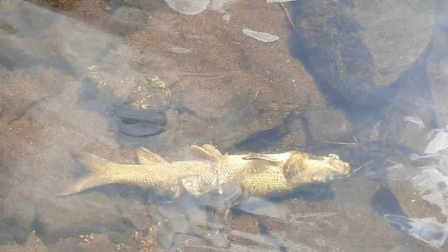 V rybníce u Skleného nad Oslavou plavaly mrtvé ryby. Otrava?