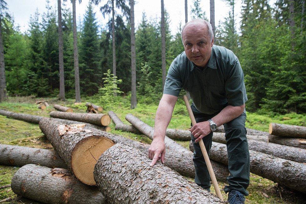 Radek Koudela vedoucí lesní výroby a obchodu se dřívím akciové společnosti Kinský Žďár.