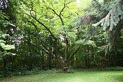 V době, kdy se stal majitelem nemovitosti Gabriel Gudenus, vznikl unikátní park, který je součástí zámeckého areálu.