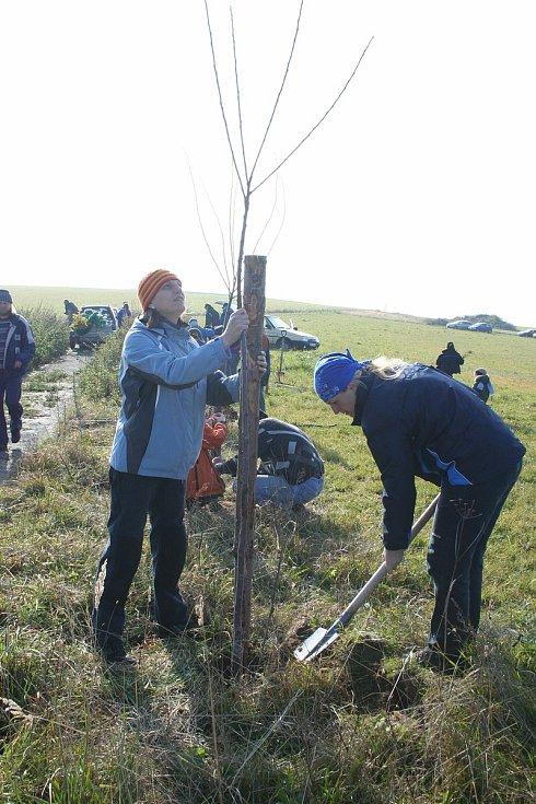 Akce zaměřené na vysazování stromořadí na Žďársku. Ilustrační foto