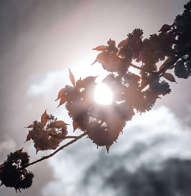 Vycházky do přírody voní jarem a lákají na bohatou paletu barev.