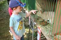Na výstavě chovatelé ukázali veřejnosti své králíky, holuby, morčata i drůbež.K vidění ale byla i další zvířata.