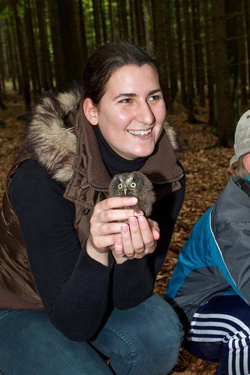 Sýc rousný patří mezi silně ohrožené ptačí druhy. Ornitologové mláďata také pravidelně kroužkují a zřizují jim budky pro hnízdění.