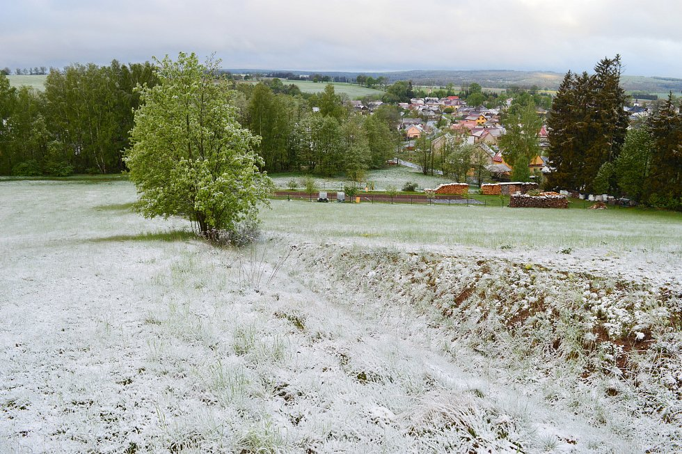 Ledoví muži přinesli sníh i mráz. 12. květen 2020, Vojnův Městec, Kraj Vysočina, 595 metrů nad mořem, - 0,5 stupňů Celsia, cca 6 hodin ráno.
