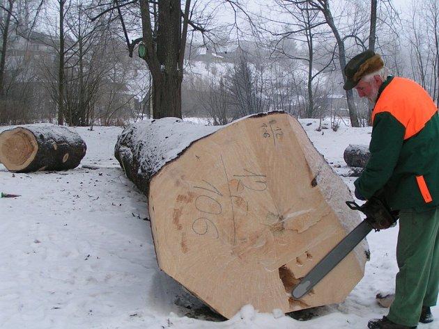 Kácení bylo dohodnuté na tuto zimu, podle příhodného počasí.