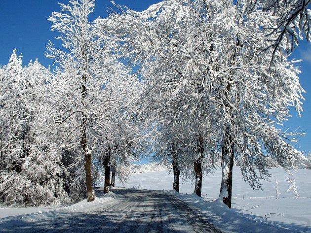Jasany byly jako rychle rostoucí dřevina velmi často vysazovány podél silnic. Takovéto stromořadí se nalézá například mezi Rokyrnem a Maršovicemi, kde bylo vysázeno v roce 1927 poté, kdy byla dokončena nová komunikace.