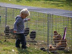 Areál zemědělské školy obsadilo domácí zvířectvo.