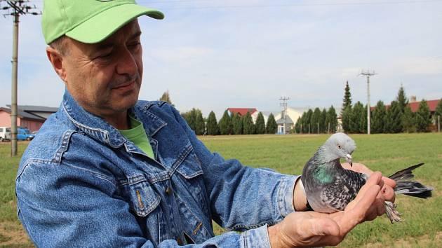 Mistr Evropy ve výcviku akrobatických holubů Josef Voráček s jedním ze svých opeřených akrobatů.