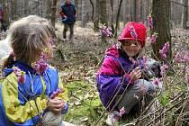 Mezi první posly jara patří kromě bledulí a sněženek také omamně vonící lýkovce jedovaté.