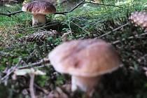 Houby se v lesích sice najít dají, ale kvůli suchu jen zřídka.