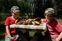 Milovníci houbových pokrmů mají možnost obohatit svůj jídelníček.