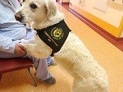 Fenka Joy chodí obveselovat dlouhodobě nemocné pacienty.