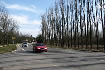 Začátek kácení topolů u silnice I/19 v Novoměstské ulici je plánován v pondělí 23. března.