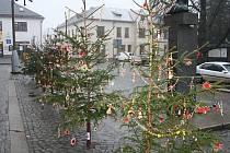 Před 1. základní školou v Novém Městě na Moravě stojí jedenáct vánočních stromečků.